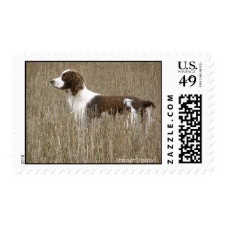 Field Bred English Springer Spaniel Postage
