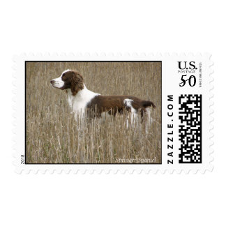 Field Bred English Springer Spaniel Postage