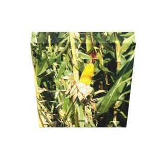 Field Corn Canvas Print