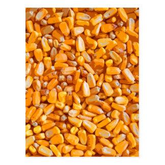 Field Corn kernals Post Card