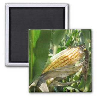 Field Corn Refrigerator Magnets