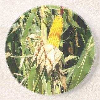 Field Corn Sandstone Coaster