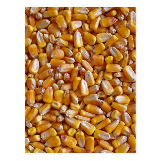 Field Corn shelled Post Card