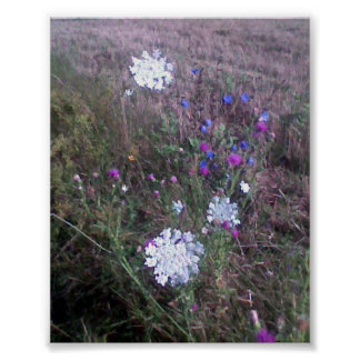Field flowers poster