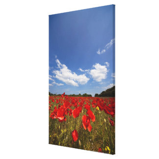 Field Full Of Red Flowers Canvas Prints