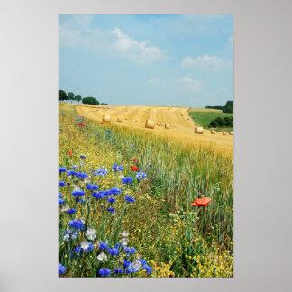 Field Hamois Belgium Poster