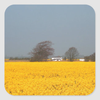 Field in Bloom & Country Cottage Square Sticker