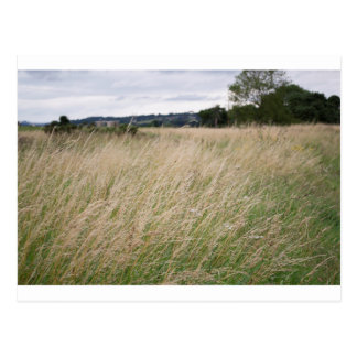 Field in the English countryside Postcard