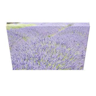 Field Lavender Canvas Print