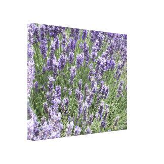 Field Lavender fest Canvas Print
