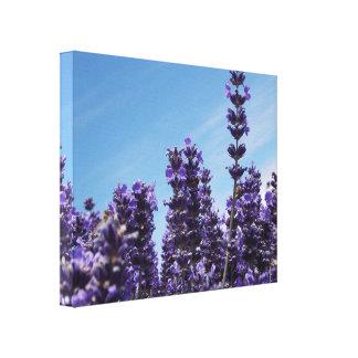 Field Lavender fest Honey Bee 2 Canvas Print