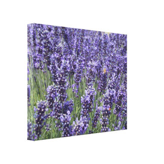 Field Lavender fest Honey Bee 3 Canvas Print