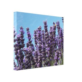 Field Lavender fest Honey Bee Canvas Print