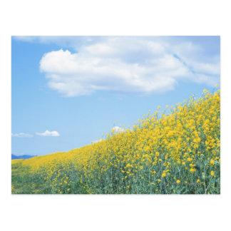 Field Mustard Postcard