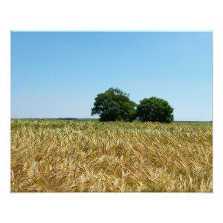Field of Barley in Cornwall Photograph