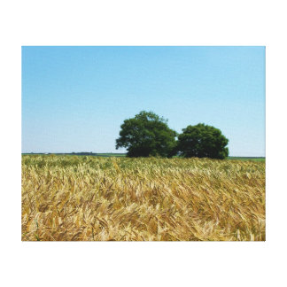 Field of Barley in Cornwall Photograph Canvas Print