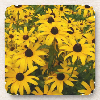 Field of Black Eyed Susans Cork Coasters