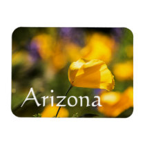 Field of blooming poppies, Arizona Magnet