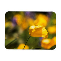 Field of blooming poppies magnet
