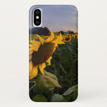 Field of Blooming Sunflowers iPhone X Case