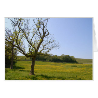 Field of Buttercups Card