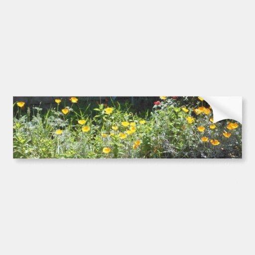 Field of CA Poppies Car Bumper Sticker