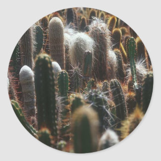 field of cactus sticker