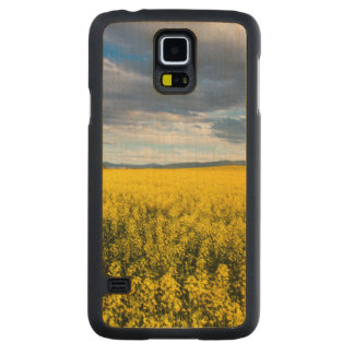 Field Of Canola In Late Evening Light Carved® Maple Galaxy S5 Slim Case