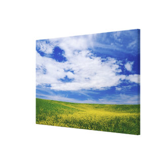 Field of Canola or Mustard flowers, Palouse Canvas Print