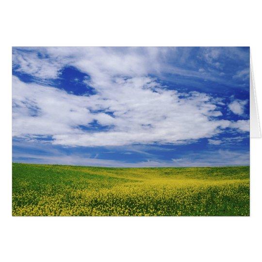 Field of Canola or Mustard flowers, Palouse Card