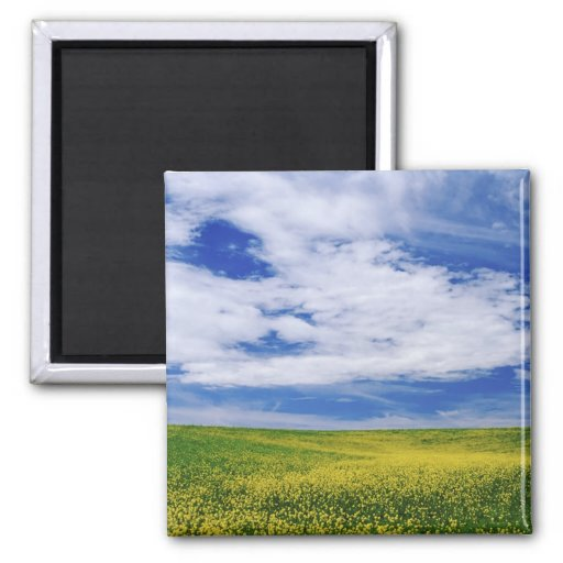 Field of Canola or Mustard flowers, Palouse Refrigerator Magnets