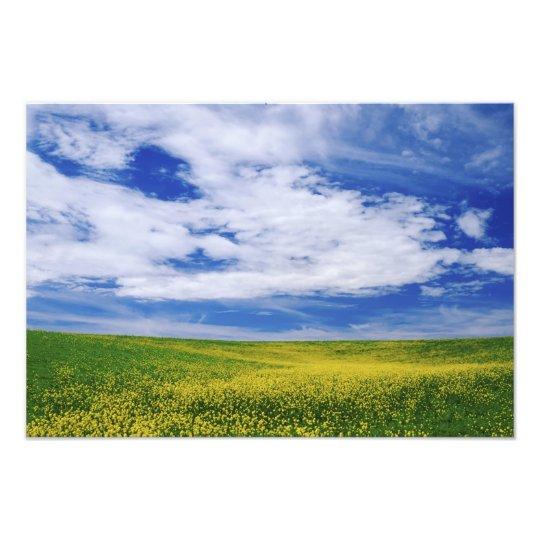 Field of Canola or Mustard flowers, Palouse Photo Print