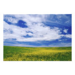 Field of Canola or Mustard flowers, Palouse Photograph