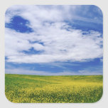 Field of Canola or Mustard flowers, Palouse Square Sticker