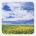 Field of Canola or Mustard flowers, Palouse Sticker