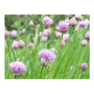 Field Of Chives In Flower Postcard