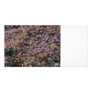 field of colored flowers faded plant photo picture card