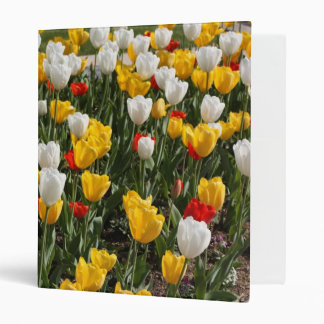 Field of colorful red white & yellow tulips 3 ring binder