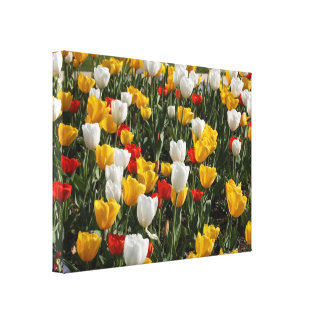 Field of Colorful Tulips: Wide Zoom View Canvas Print