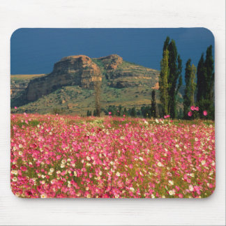 Field of Cosmos flowers, Fouriesburg District Mouse Pad
