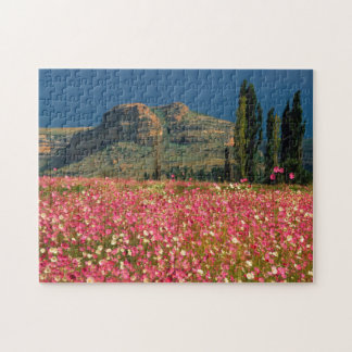 Field of Cosmos flowers, Fouriesburg District Jigsaw Puzzle