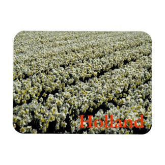 Field of daffodils magnet