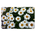 Field of Daisies Flexible Magnet