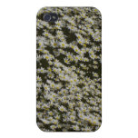 Field of Daisies i iPhone 4 Cases