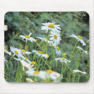 Field of Daisies mousepad