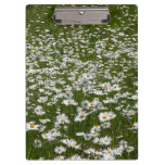 Field of Daisies Nature Photo Clipboard
