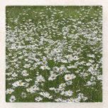 Field of Daisies Nature Photo Glass Coaster