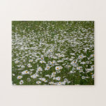 Field of Daisies Nature Photo Jigsaw Puzzle