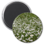 Field of Daisies Nature Photo Magnet