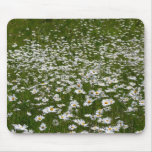 Field of Daisies Nature Photo Mouse Pad